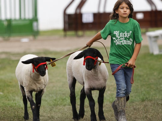 Andrea Rutledge of Big Sandy exercises her lambs Tuff and Daisy at the Chouteau County Fair in Fort Benton.