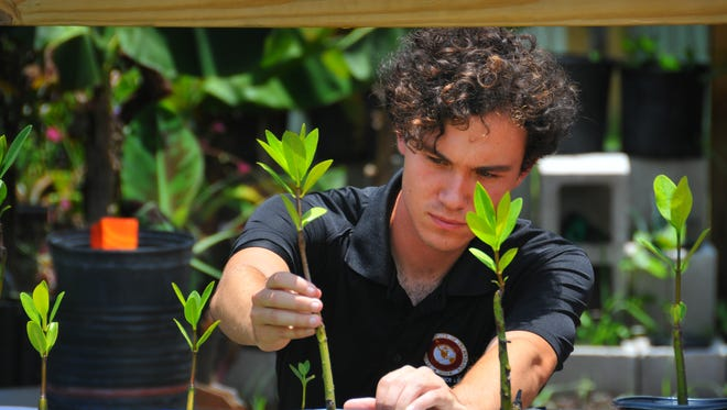 Florida Institute of Technology master's student Zach Eichholz, an intern at Satellite Beach City Hall, tends to plants at the city's future community garden.