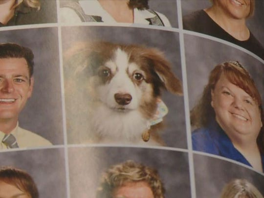 Service dogs featured in Blaine yearbooks.