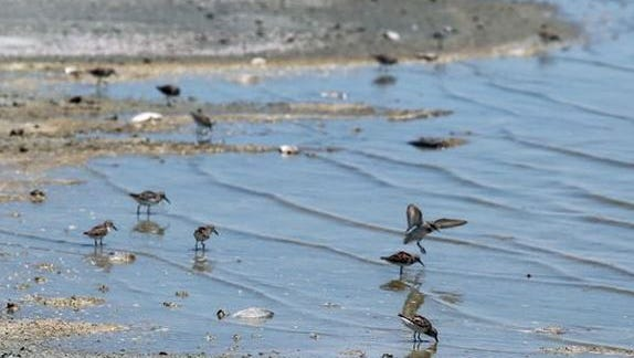 Birds gather along the shores of Bombay Beach, a small community of the north shore of the Salton Sea.