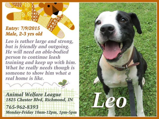 635819841569966243-1101-pet-of-week-LEO
