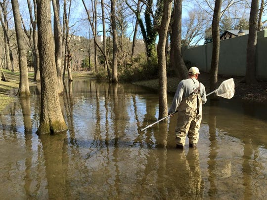 A trout rescuer looks for rainbows and browns trapped