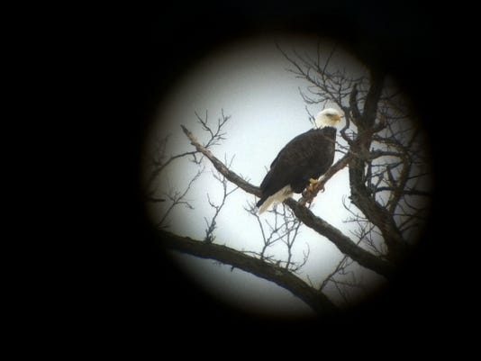 BUR20160109-DigiScope-Eagle.JPG