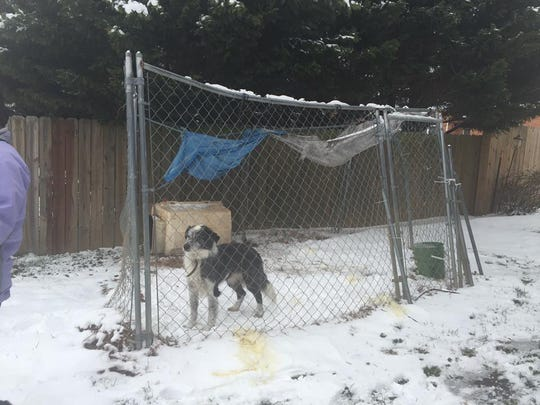 Jonas was rescued in winter storm Jonas. His cage was falling apart, his water bowl was frozen and his food bowl was underneath his dog house, which was turned on its side.