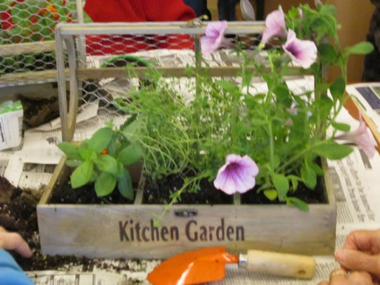 Horticultural therapy has many benefits.