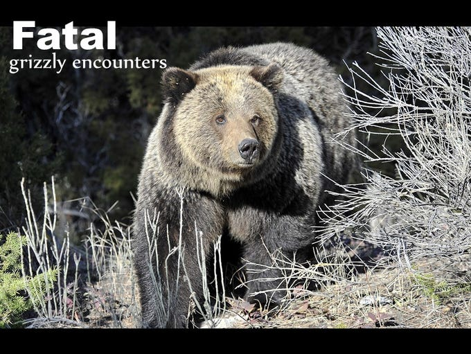 Fatal grizzly encounters
