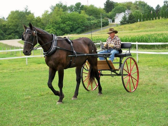 A former Standardbred race horse is being retrained for pleasure driving by Dave Kluge.