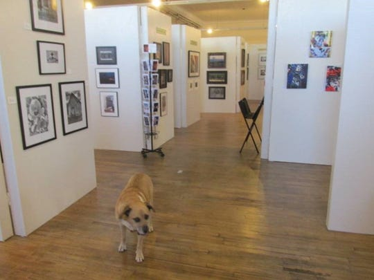 Even a dog can have an eye for fine art.