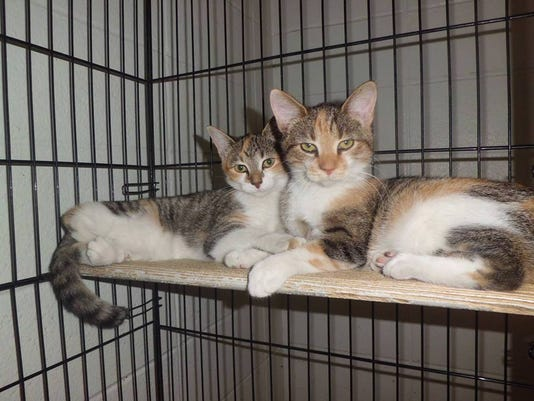 cats in shelter.jpg