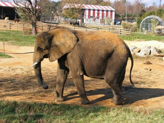 Natural Bridge Zoo was put on a list of 10 Worst Zoos for Elephants in 2016, named by a nonprofit called In Defense of Animals.