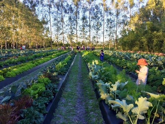 Lauren Espitia kept readers updated on the events happening at Kai-Kai Farm in Indiantown.