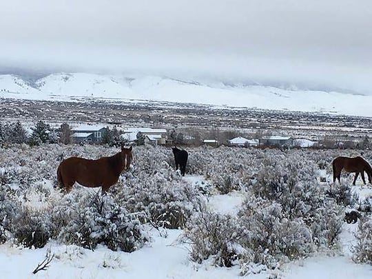 Wild horses graze near the site of a proposed residential development, Bailey Creek Estates, by Geiger Grade Road.
