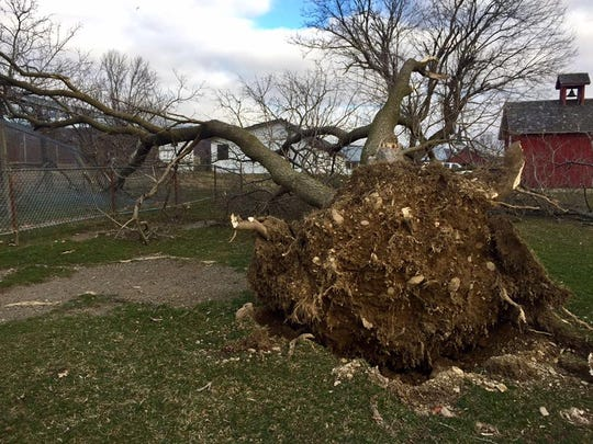 A powerful storm uprooted trees and leveled the historic blacksmith shop and museum Saturday at Space Farms in Wantage.