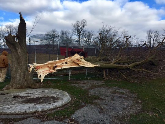 A powerful storm snapped trees and leveled the historic blacksmith shop and museum Saturday at Space Farms in Wantage.
