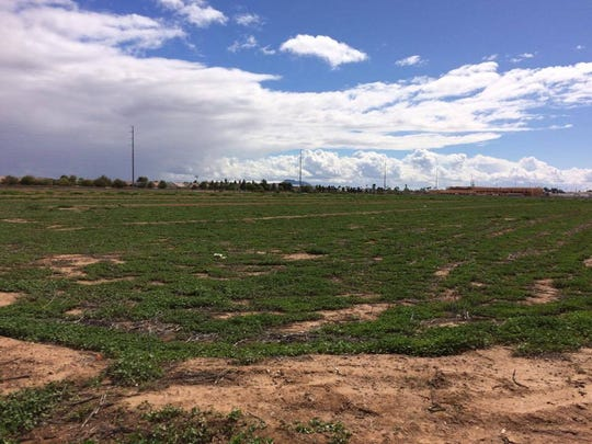 Lewis Arthur plans to move his homeless camp to this plot of land in Chandler on Friday. The group was given a one-week eviction notice by the Arizona Department of Transportation last week.