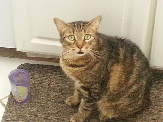 Kitty Kat Meow is missing from Treviso Bay.