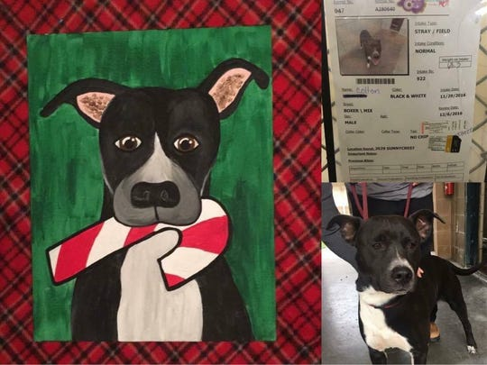 Lisa Montez painted portraits of dogs at Animal Care Services shelter in December 2016 in an effort to help get the dogs adopted.