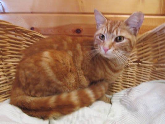 636324201654122395-morris-the-cat.jpg