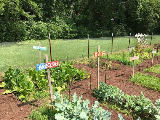 Murfreesboro Community Garden is located behind Key Memorial United Methodist Church, 808 E. State St. in Murfreesboro.