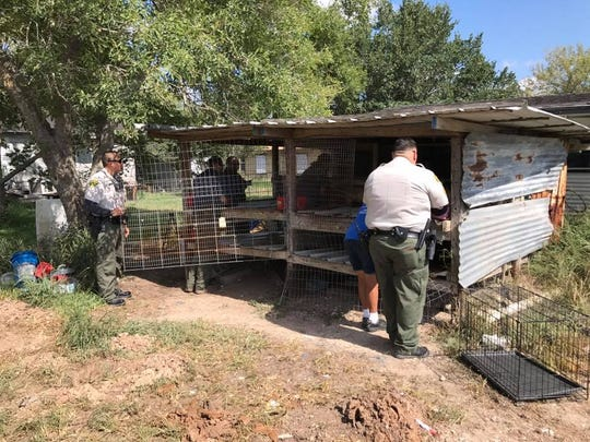 More than a dozen Shih Tzu puppies were living in chicken coops in Ben Bolt. They were rescued by the Jim Wells County Sheriff's Office.
