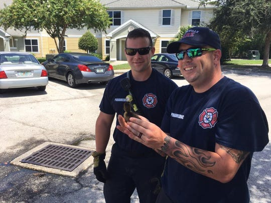 Titusville firefighters saved three baby ducks stuck
