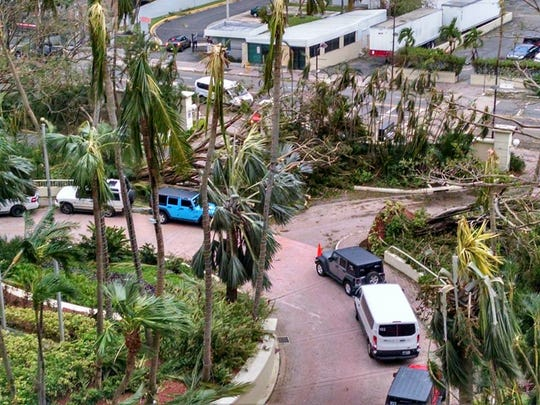 Diane and Ron Truhlar said they saw uprooted palm trees,