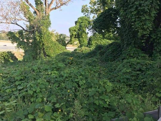 Kudzu has overgrown an abandoned property new the MLK/Interstate-71