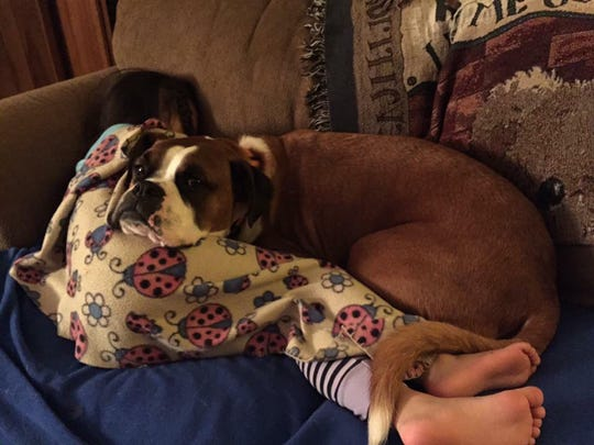 "The Whites' dog Buddy gets comfort from ""Blankie"" as Abigail covers herself with it."