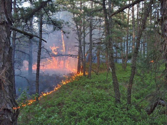 File photo of a controlled forest burn.