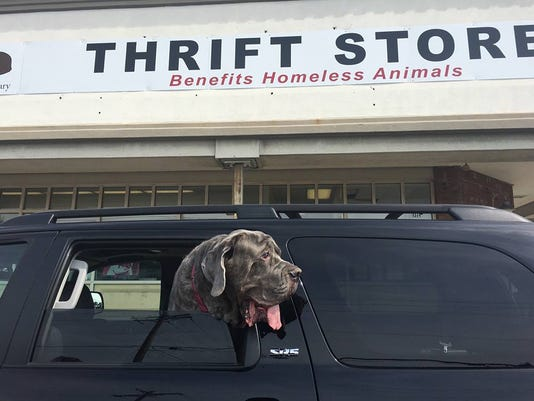 636493740458356028-Thrift-store-w-dog-in-car.jpg