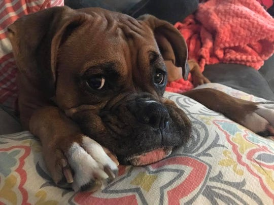 Lola was rescued on Dec. 31, after running away from