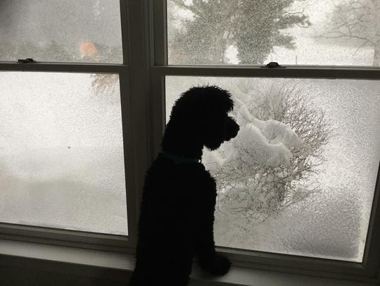 A dog looks out a window at the snow in Jamesville,
