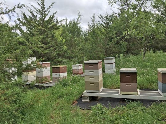 This is how Justin and Tori Engelhardt's hives appeared before winter, while still intact.