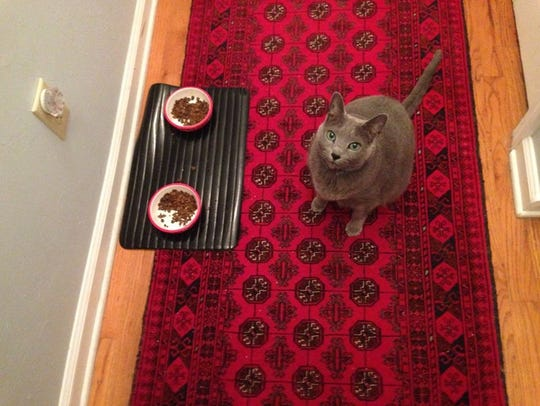 There's a cat food protest in the hall, y'all. Pinko