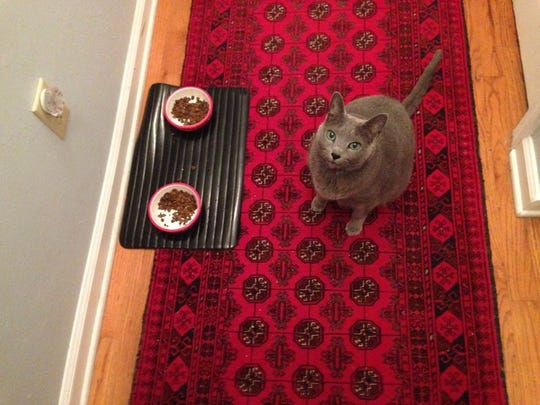 There's a cat food protest in the hall, y'all. Pinko gives a critical opinion of the new cuisine.