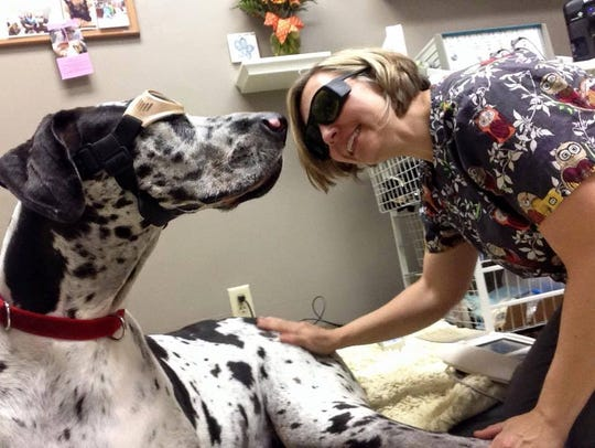 Veterinarian Cheryl Cross provides laser therapy to