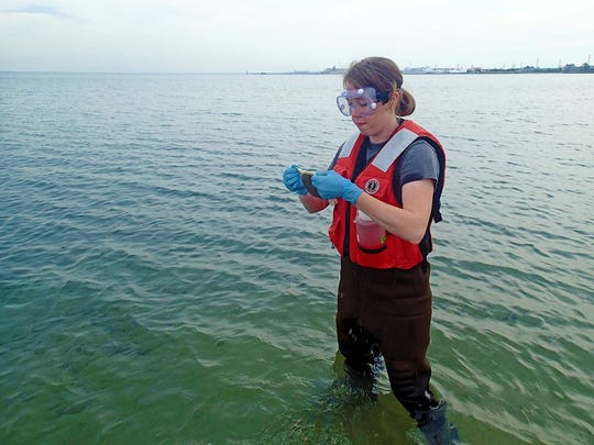Chelsea Weiskerger, a PhD student in Michigan State's environmental engineering department, samples lakebed sediments at a Lake Michigan beach in Indiana to conduct bacterial analysis for E. coli on the sand in the fall of 2016.