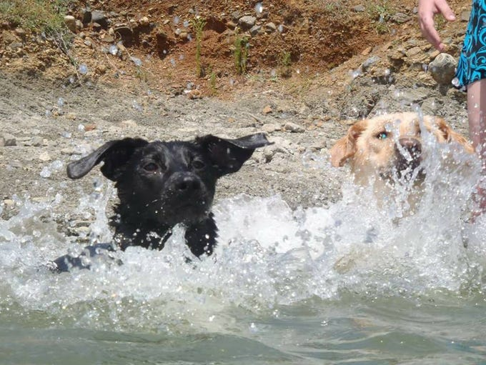 Stormy (left) and Teal go for a synchronized swim at