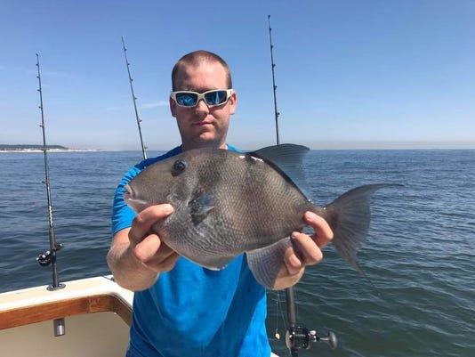 636646730578477550-trigger-fish.jpg