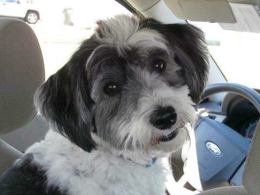 636668412535679988-murphy-the-mauled-dog.jpg