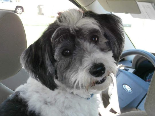Murphy, a 6-year-old Havanese, died after being attacked