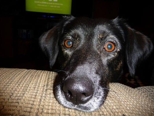 635518251719540740-found-momma-dog