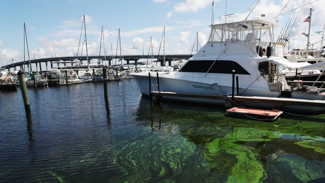 Algae builds up at the Fort Myers Yacht Basin on Thursday. The bloom started about two weeks ago in the upper stretches of the river and has since worked its way toward the coast.