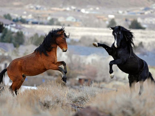 w02-09-Wild Horses Lawsuit.jpg