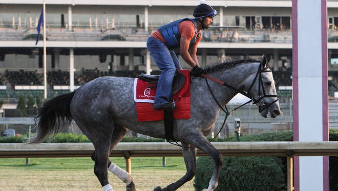 Exercise rider Marco Cano rides Belmont Stakes contender Conquest Curlinate around the track during a morning workout at Churchill Downs Sunday. May 24, 2015.