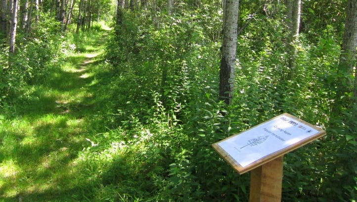 An observation station in a grove of quaking aspen trees on the Phenology Trail at the Roy H. Park Preserve in Dryden, NY.