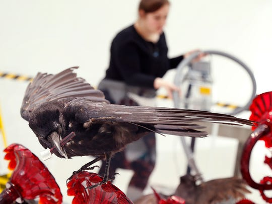 """A taxidermic crow sits atop Javier Pérez' 2011 piece, """"Carroña"""" inside the Corning Museum of Glass as museum preparators diligently clean the display on March 29."""