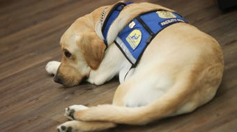 New Castle County police department introduces Nikko, a facility assistance dog. Nikko will work as a goodwill ambassador for the department.