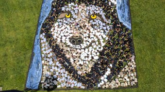 Daniel Dancer, Art for the Sky artist, used more than 800 students and faculty at West Clay Elementary School to create an image of a wolf.