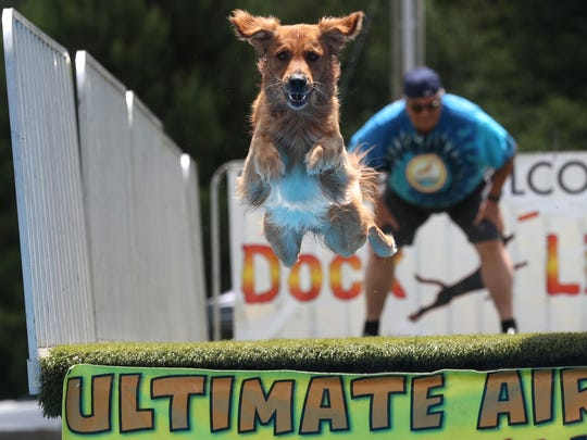 Dakota, a junior division national champion leaper, springs into action in front of his owner Robert Jones in the Ultimate Air Dogs display during Monticello's 68th annual Watermelon Festival on Saturday, June 16, 2018.
